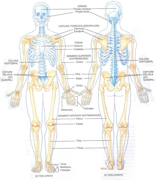 Anatomia: Huesos Generalidades | sophia bizarra Blog