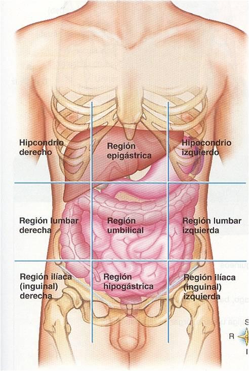 anatomia planimetria | sophia bizarra Blog